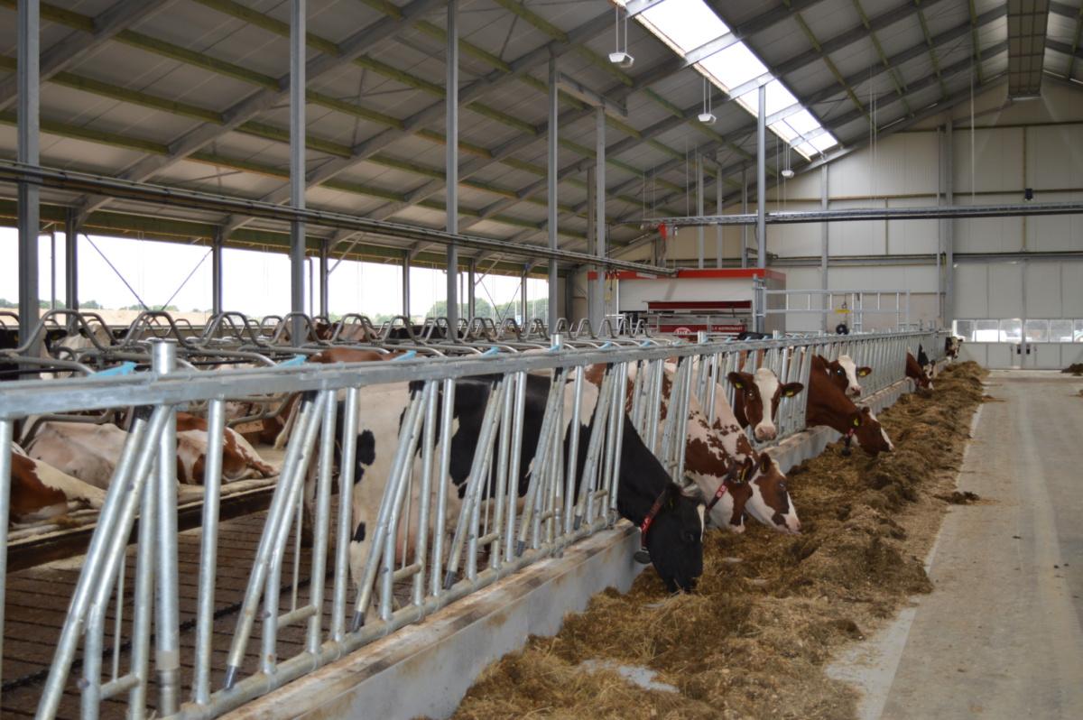 Koeienstal Meuwissen Sint Joost